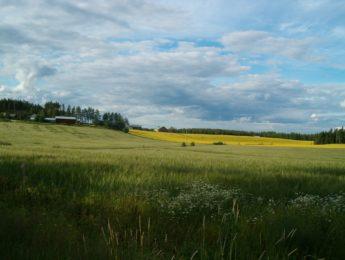 Heiskalan peltoja, kuvannut Matti Leiviskä