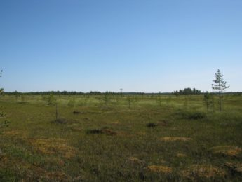 Kadonnut Saarineva luonnontilassa, kuvannut Matti Leiviskä