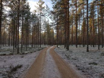 Kangastie, kuvannut Matti Leiviskä