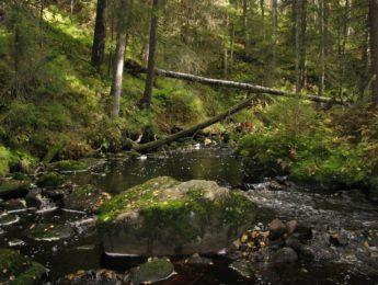 Kuurajoki Pöytäniitynkolossa, kuvannut Matti Leiviskä